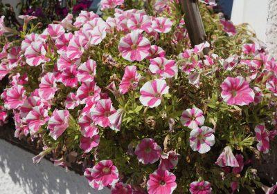 Blumenkasten Ammersee