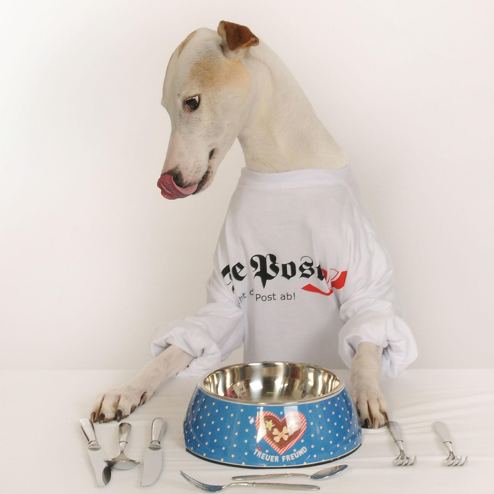 Hunde Verwöhnmenu