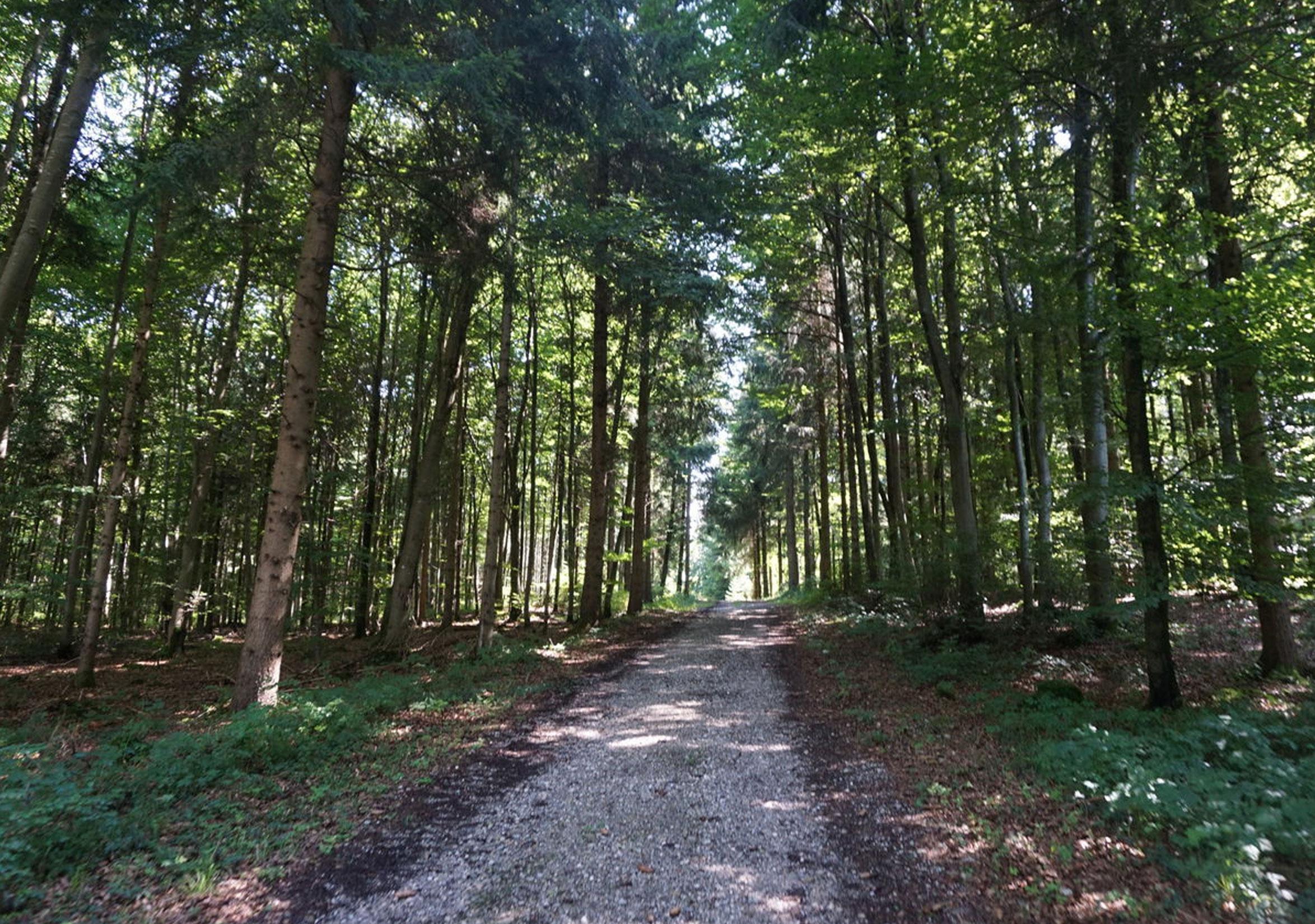 Schotterweg Jaudesberg